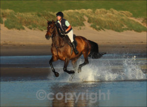 """The Gallop""  Stevie Rafferty's fabulous image of a galloping horse"